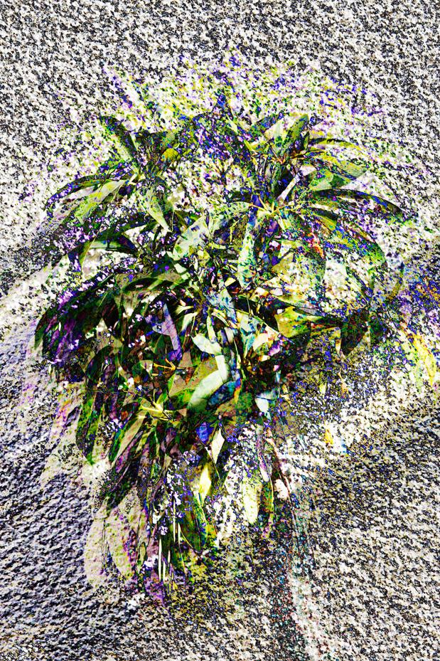 Kamandy6_OrdinaryHouseplant
